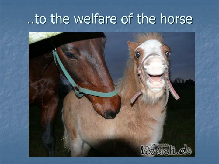 ..to the welfare of the horse
