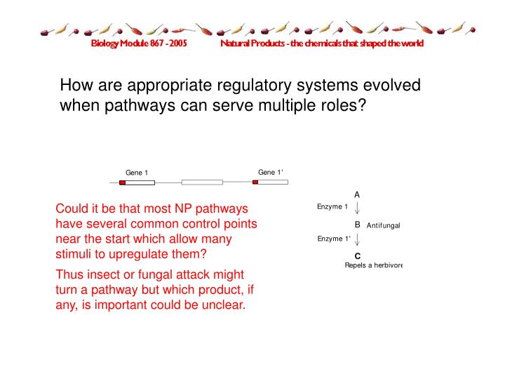How are appropriate regulatory systems evolved when pathways can serve multiple roles?