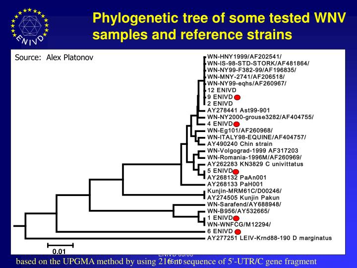 Phylogenetic tree of some tested WNV samples and reference strains