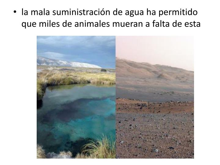 la mala suministración de agua ha permitido que miles de animales mueran a falta de esta