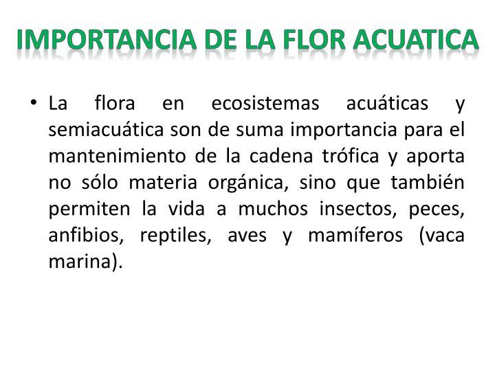 IMPORTANCIA DE LA FLOR ACUATICA