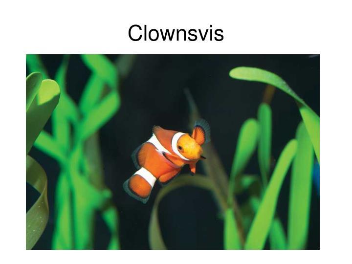 Clownsvis