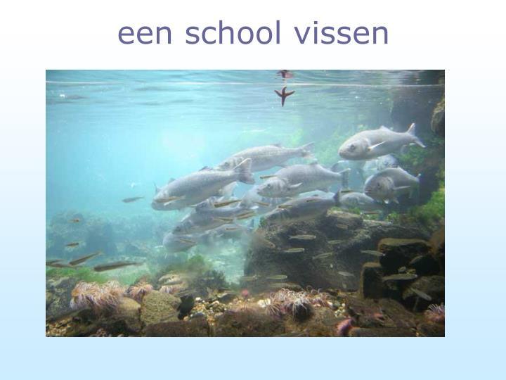 een school vissen