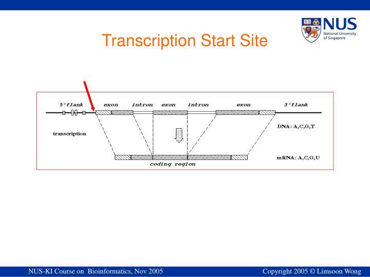 Transcription Start Site