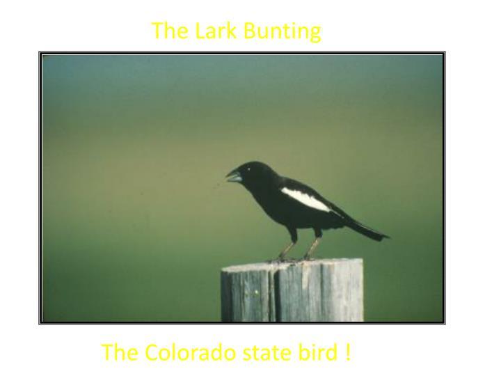The Lark Bunting