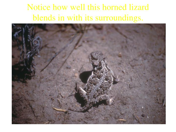 Notice how well this horned lizard blends in with its surroundings.