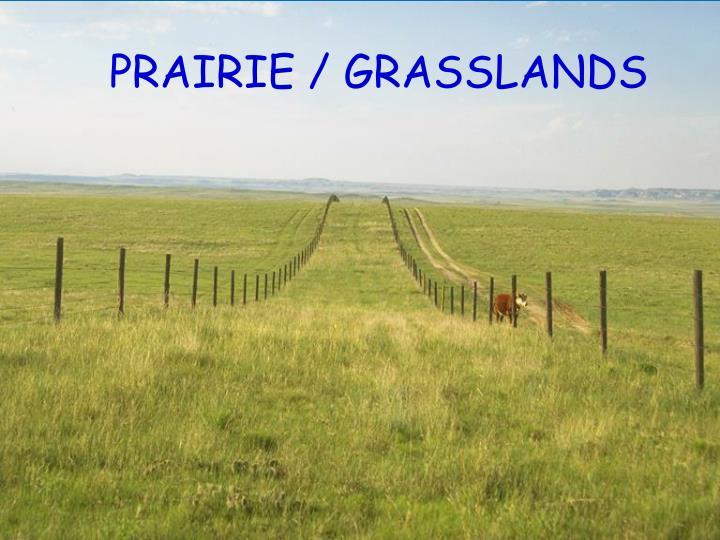 PRAIRIE / GRASSLANDS