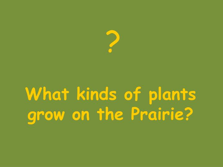 What kinds of plants grow on the Prairie?