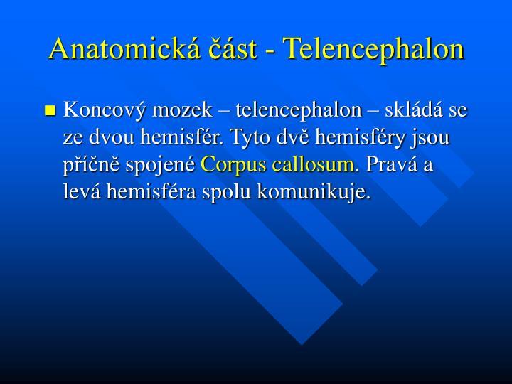 Anatomická část - Telencephalon