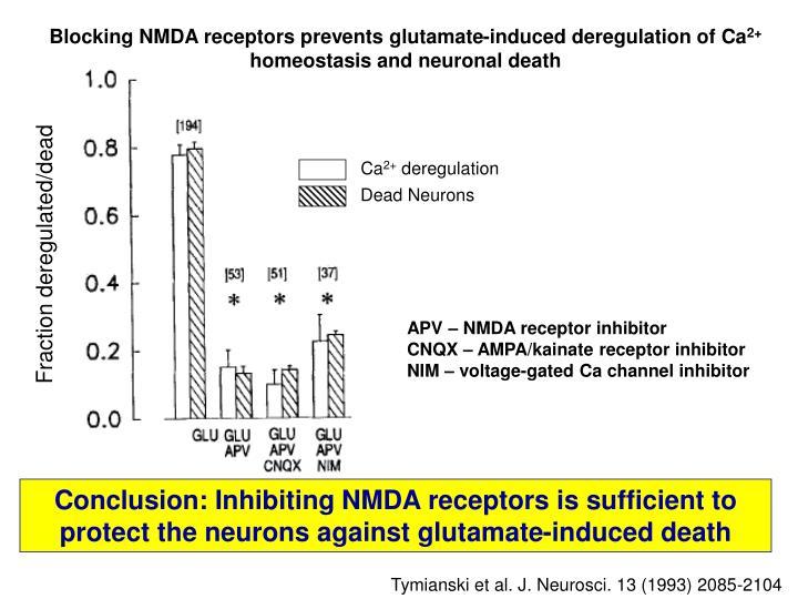 Blocking NMDA receptors prevents glutamate-induced deregulation of Ca