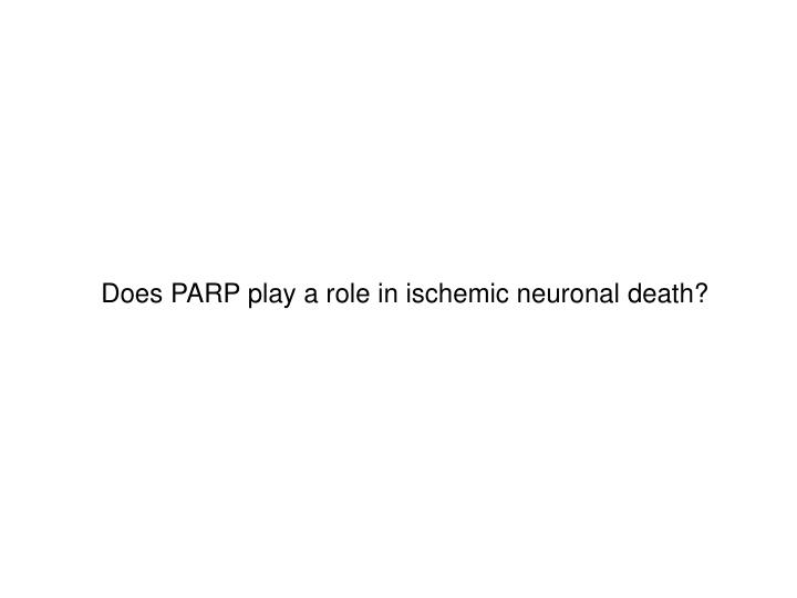 Does PARP play a role in ischemic neuronal death?