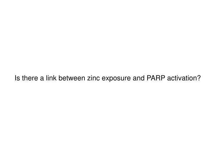 Is there a link between zinc exposure and PARP activation?