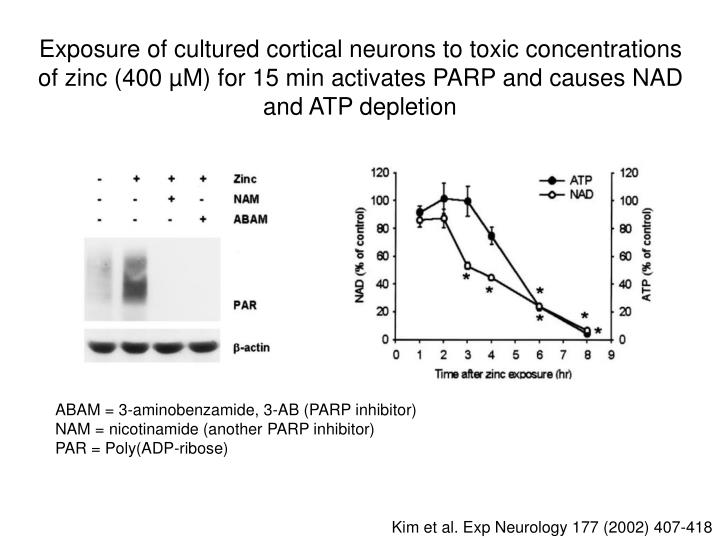 Exposure of cultured cortical neurons to toxic concentrations of zinc (400 µM) for 15 min activates PARP and causes NAD and ATP depletion