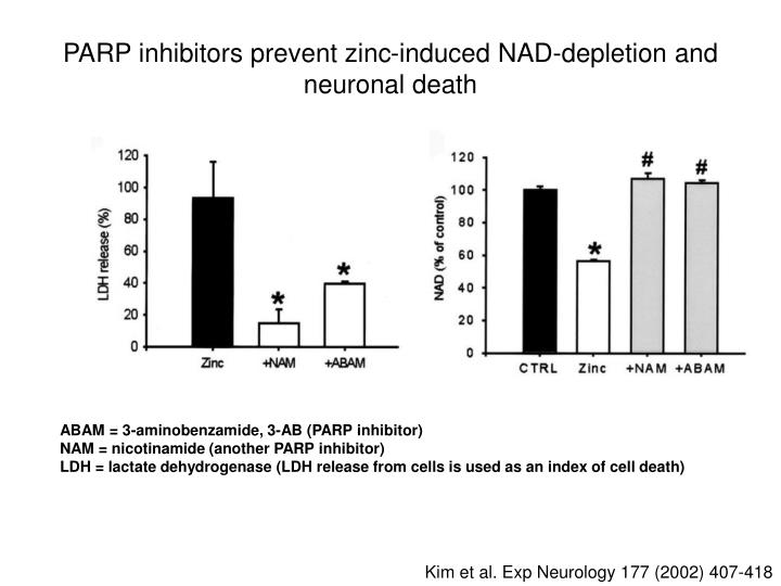 PARP inhibitors prevent zinc-induced NAD-depletion and neuronal death