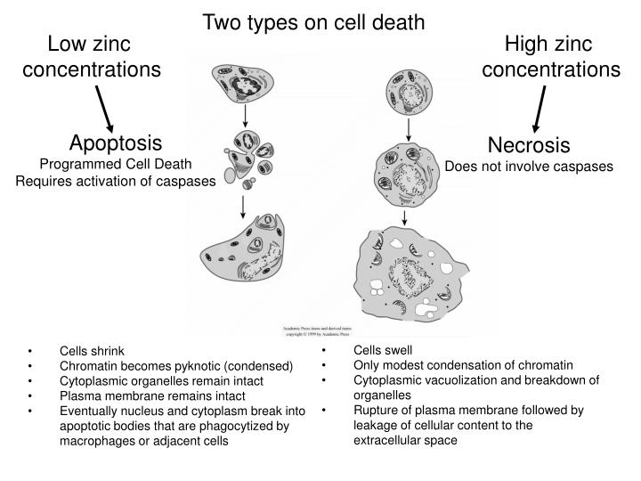 Two types on cell death