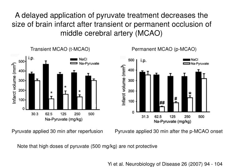 A delayed application of pyruvate treatment decreases the size of brain infarct after transient or permanent occlusion of middle cerebral artery (MCAO)