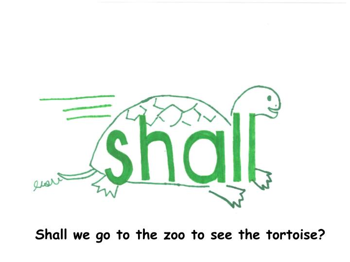 Shall we go to the zoo to see the tortoise?