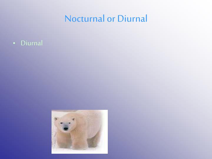 Nocturnal or Diurnal