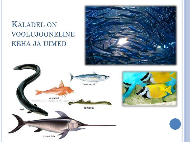 Kaladel on voolujooneline keha ja uimed