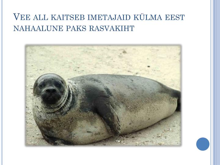 Vee all kaitseb imetajaid külma eest nahaalune paks rasvakiht
