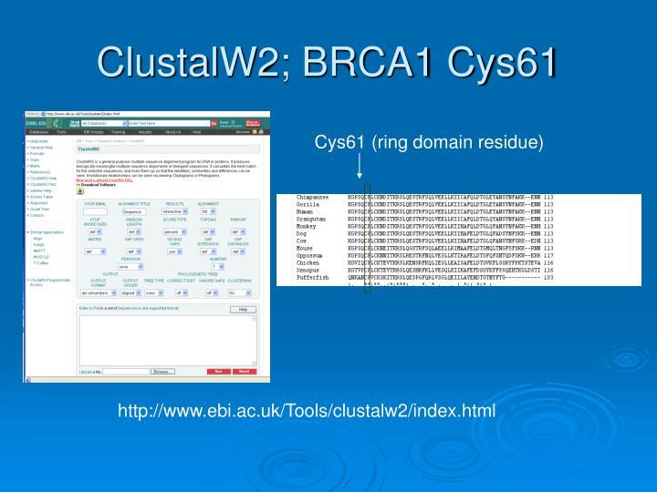 ClustalW2; BRCA1 Cys61