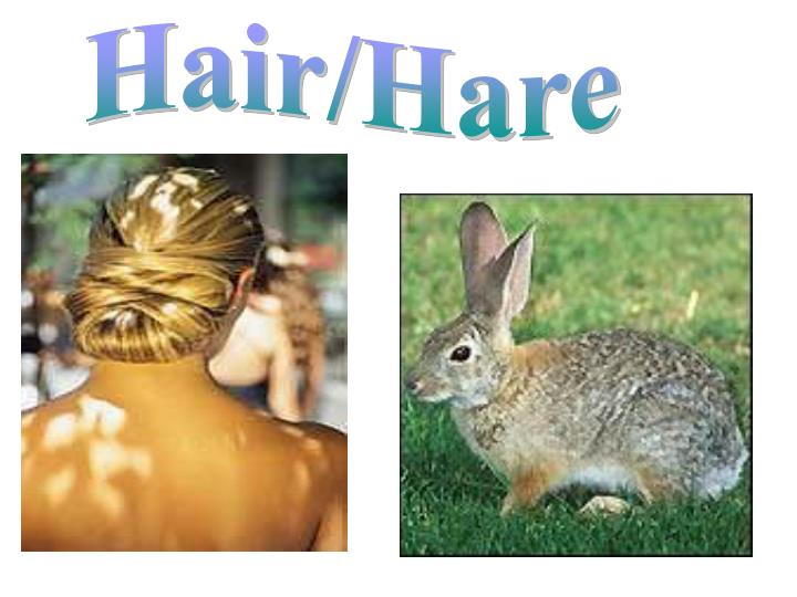 Hair/Hare