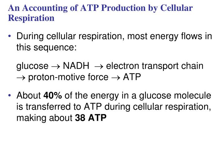 An Accounting of ATP Production by Cellular Respiration