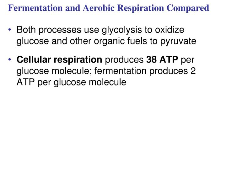 Fermentation and Aerobic Respiration Compared