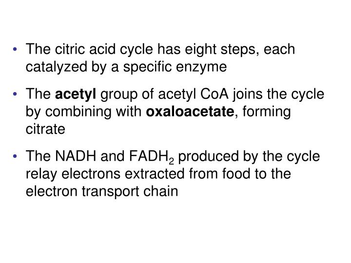 The citric acid cycle has eight steps, each catalyzed by a specific enzyme