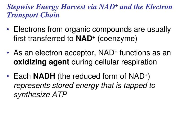 Stepwise Energy Harvest via NAD