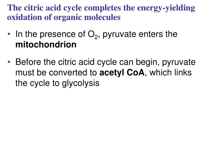 The citric acid cycle completes the energy-yielding oxidation of organic molecules