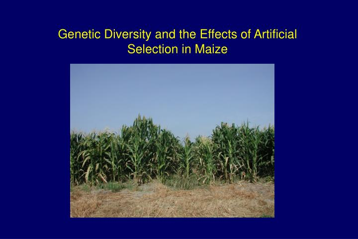 Genetic Diversity and the Effects of Artificial