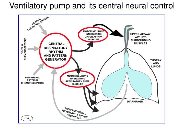 Ventilatory pump and its central neural control