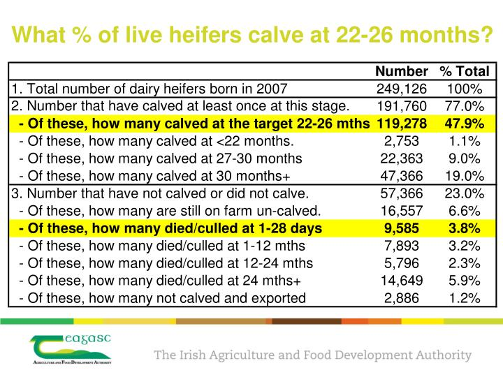 What % of live heifers calve at 22-26 months?