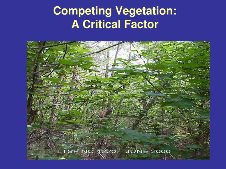 Competing Vegetation: