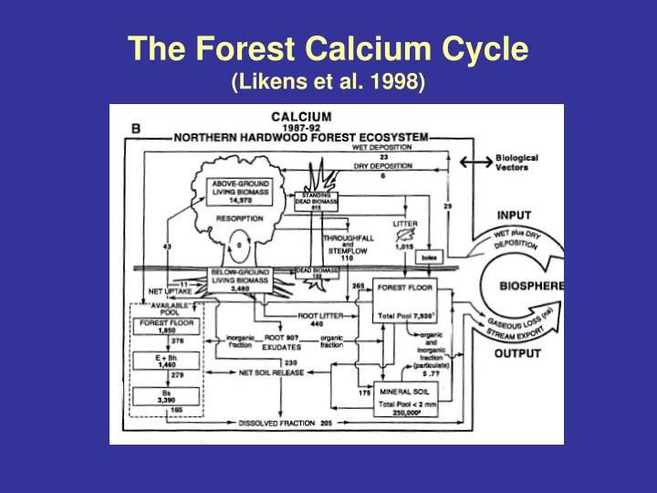 The Forest Calcium Cycle