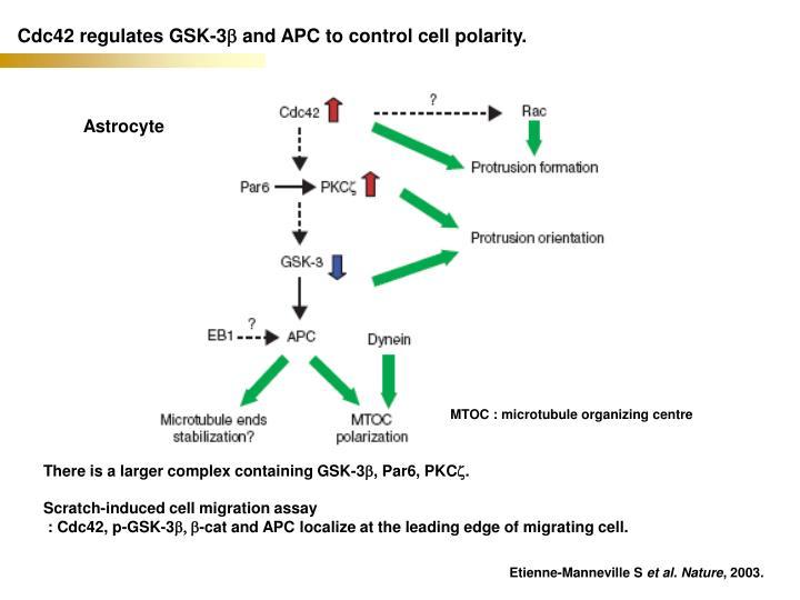 Cdc42 regulates GSK-3