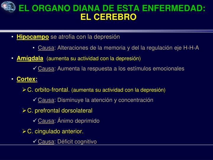 EL ORGANO DIANA DE ESTA ENFERMEDAD: