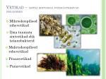 vetikad lihtsa ehitusega fotos nteesivad organismid