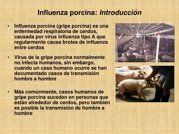Influenza porcina (gripe porcina) es una enfermedad respiratoria de cerdos, causada por virus influenza tipo A que regularmente causa brotes de influenza entre cerdos