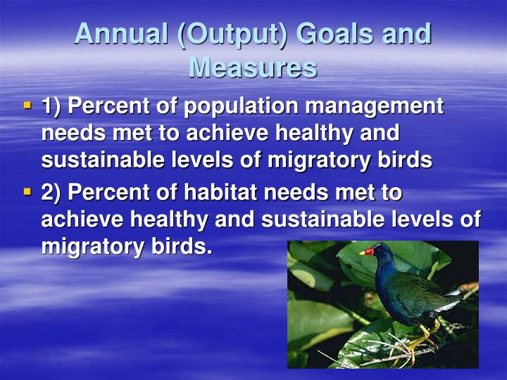 Annual (Output) Goals and Measures