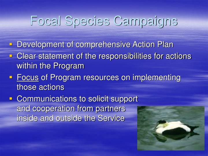 Focal Species Campaigns