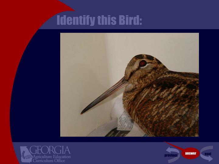 Identify this Bird: