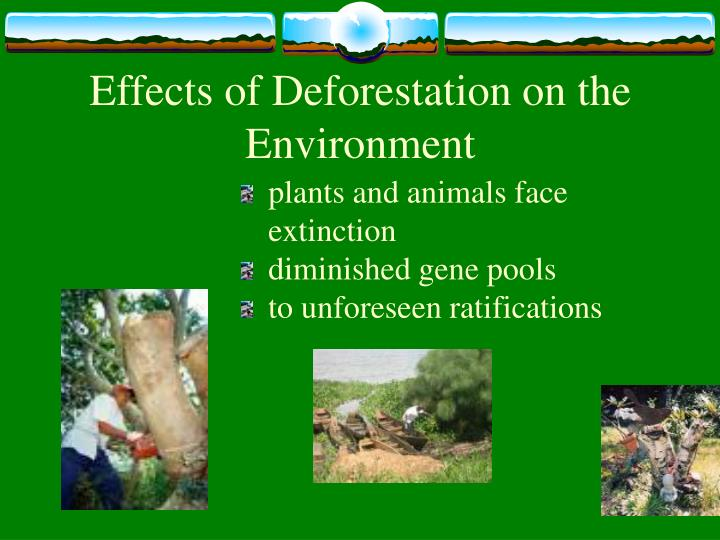 essay on dangers of deforestation Deforestation is the permanent destruction of forests in order to make the land available for other uses an estimated 18 million acres (73 million hectares) of forest, which is roughly the.