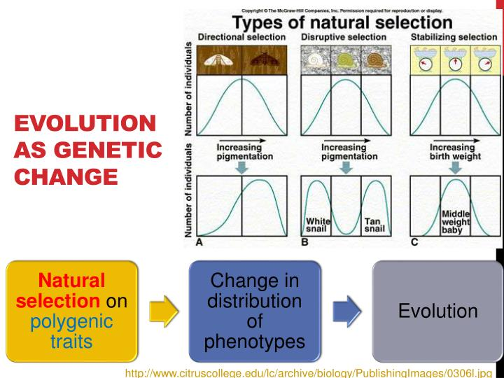 modern evolutionary theory The theory of evolution is the basis of modern biology theodosius dobzhansky , a well-known evolutionary biologist , has said: nothing in biology makes sense except in the light of evolution [10.