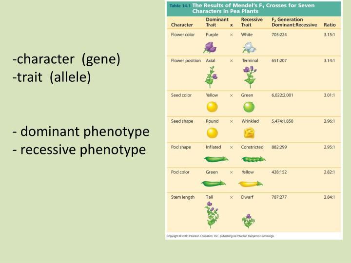 -character  (gene)