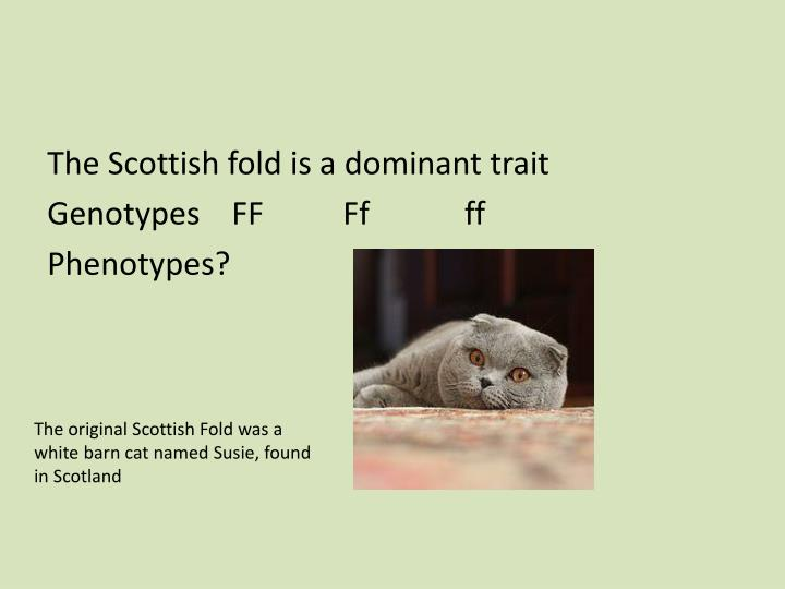 The Scottish fold is a dominant trait