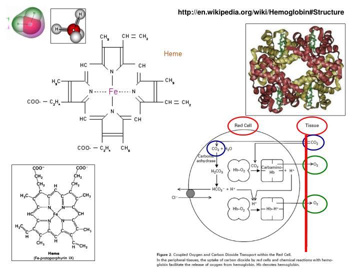 http://en.wikipedia.org/wiki/Hemoglobin#Structure