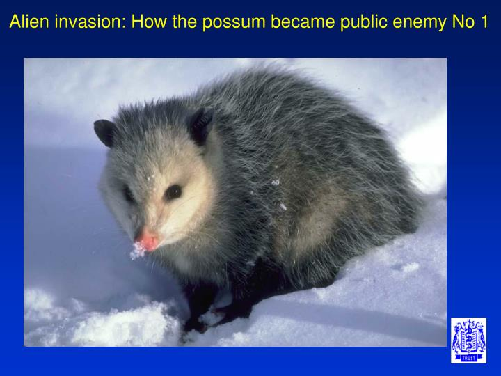 Alien invasion: How the possum became public enemy No 1