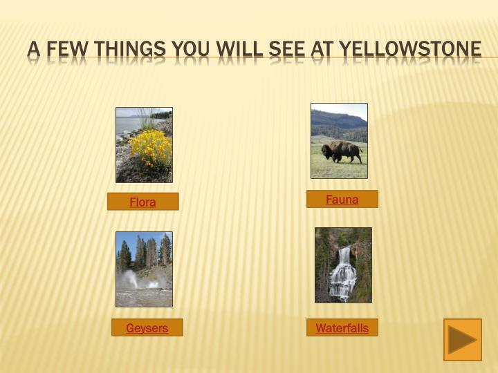 A few things you will see at yellowstone